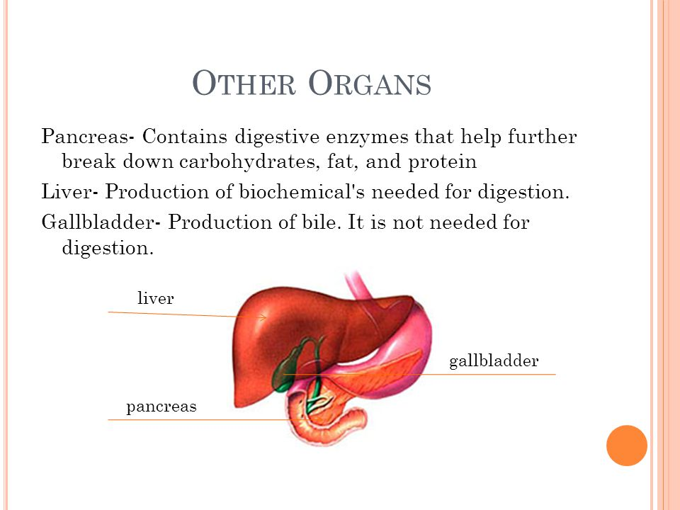O THER O RGANS Pancreas- Contains digestive enzymes that help further break down carbohydrates, fat, and protein Liver- Production of biochemical's ne