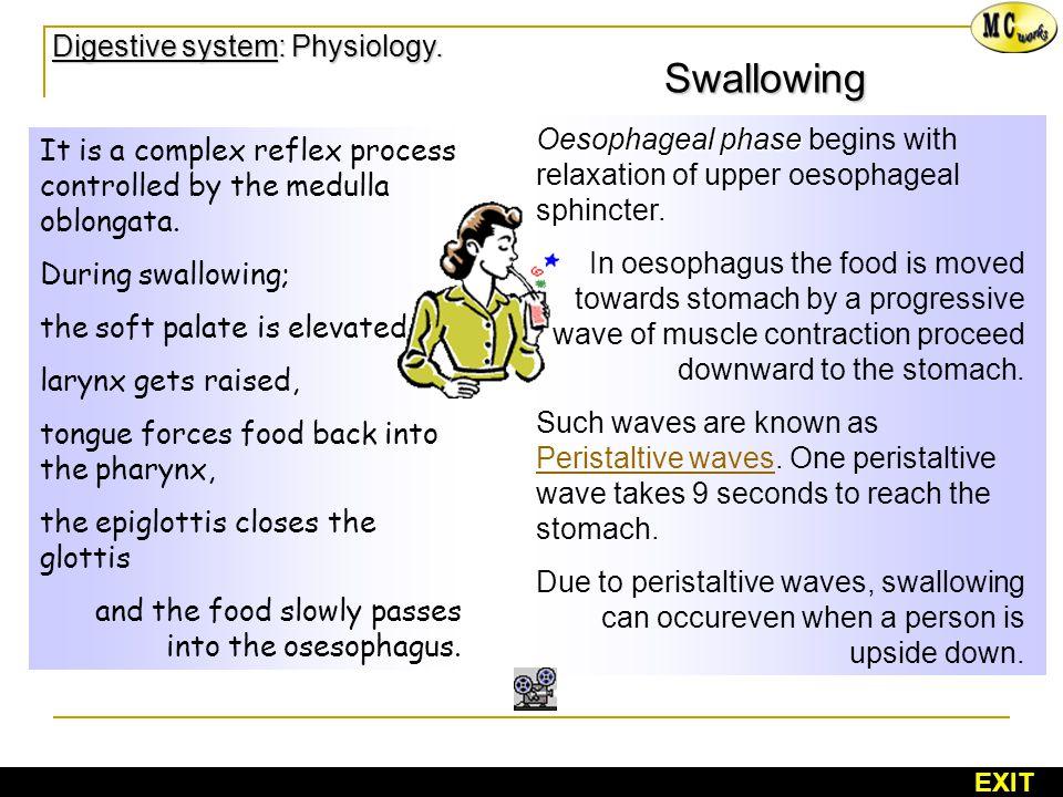 Digestive system: Physiology. Digestive system: Physiology.