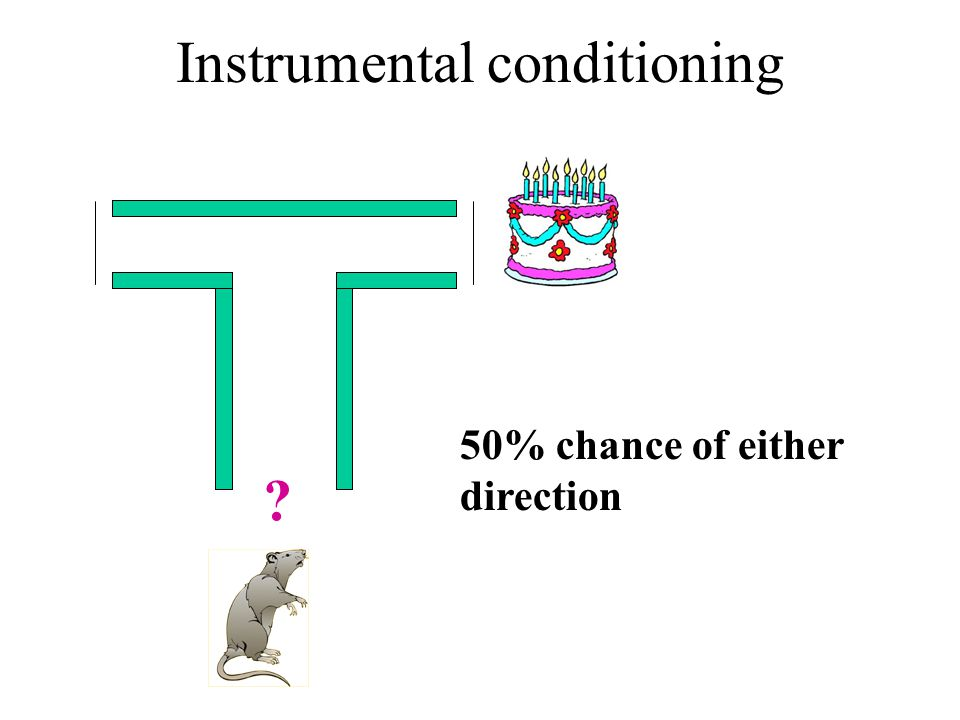 Instrumental conditioning 50% chance of either direction