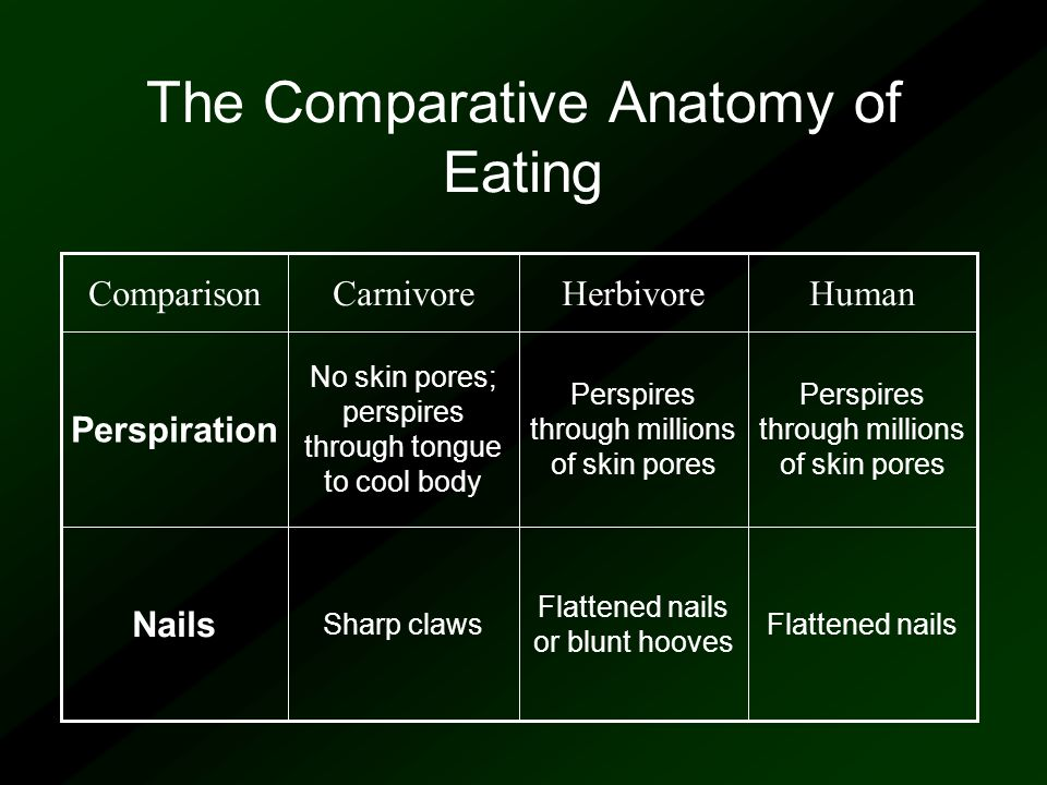 The Comparative Anatomy of Eating Perspires through millions of skin pores No skin pores; perspires through tongue to cool body Perspiration Flattened nails Flattened nails or blunt hooves Sharp claws Nails HumanHerbivoreCarnivoreComparison