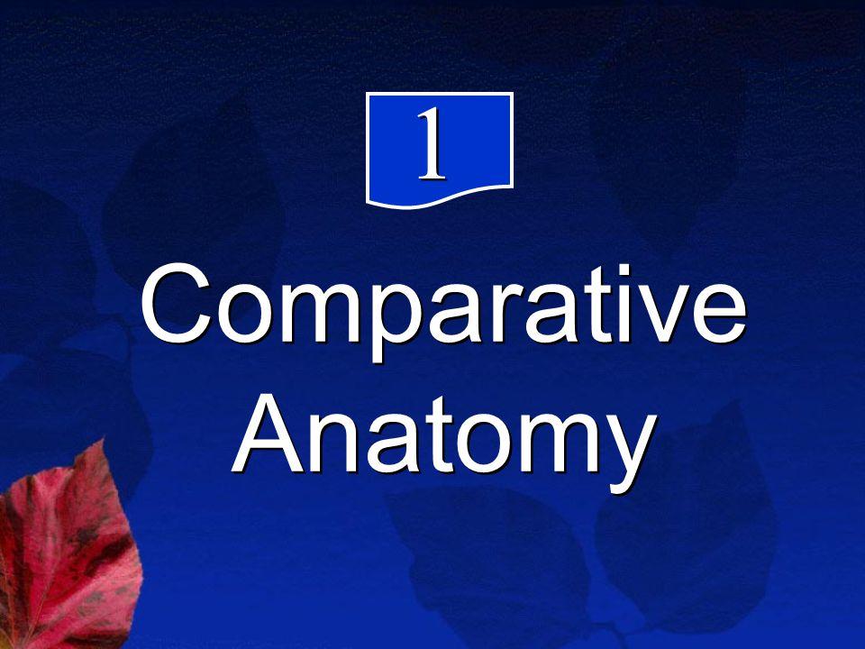 Comparative Anatomy 1 1