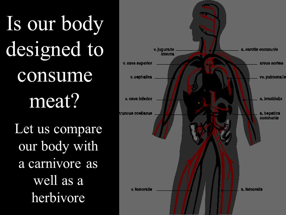 Is our body designed to consume meat.