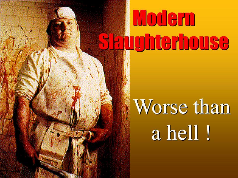 Modern Slaughterhouse Worse than a hell !