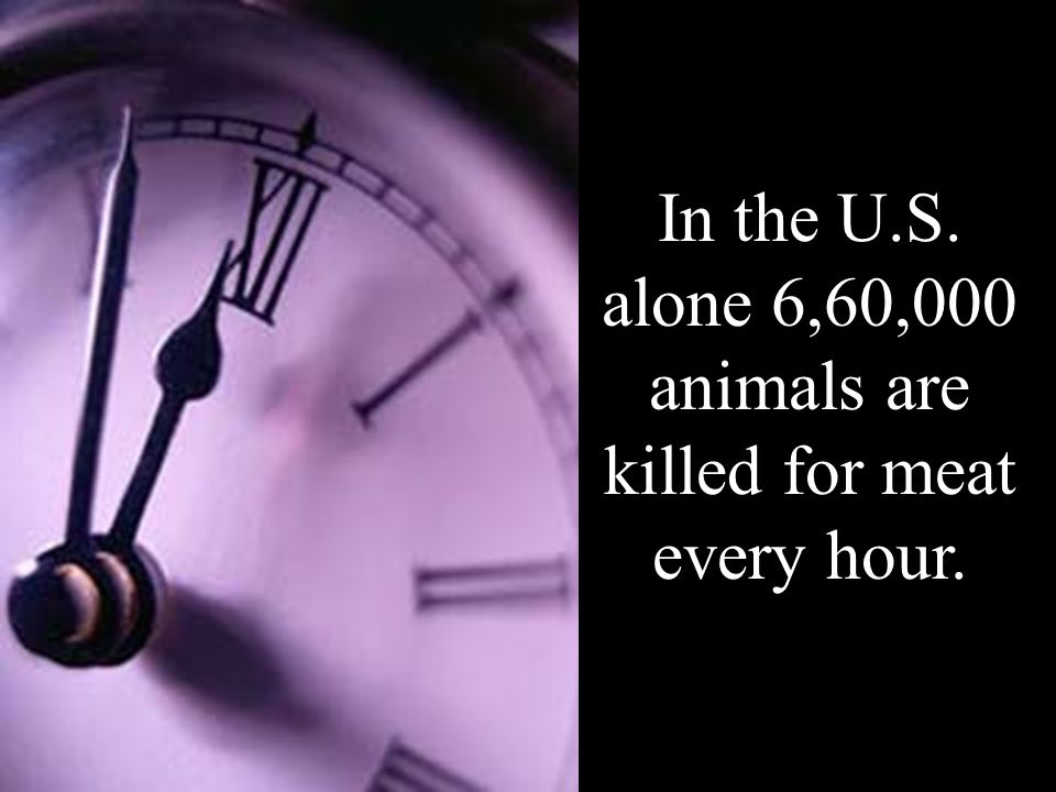 In the U.S. alone 6,60,000 animals are killed for meat every hour.