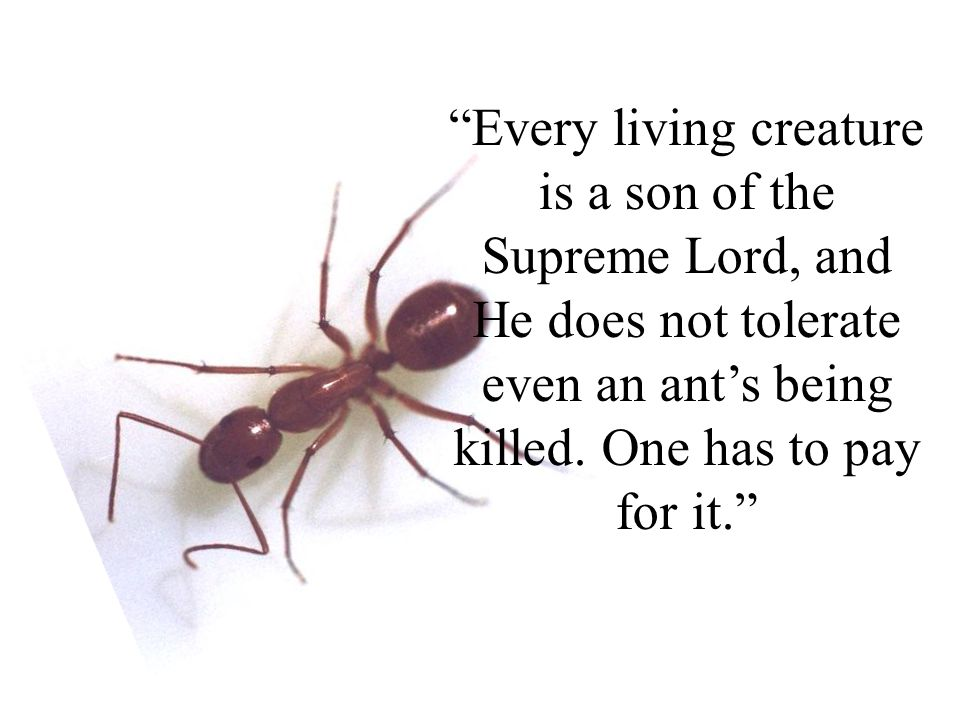 Every living creature is a son of the Supreme Lord, and He does not tolerate even an ant's being killed.