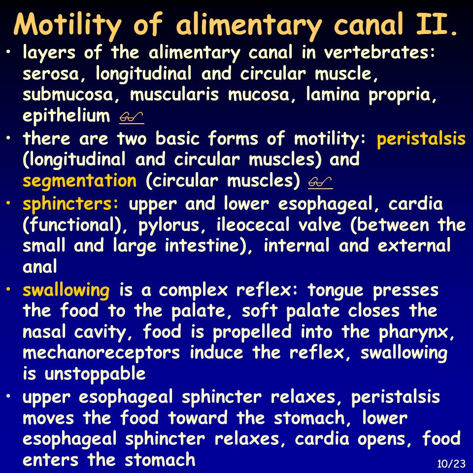 Motility of alimentary canal II. layers of the alimentary canal in vertebrates: serosa, longitudinal and circular muscle, submucosa, muscularis mucosa
