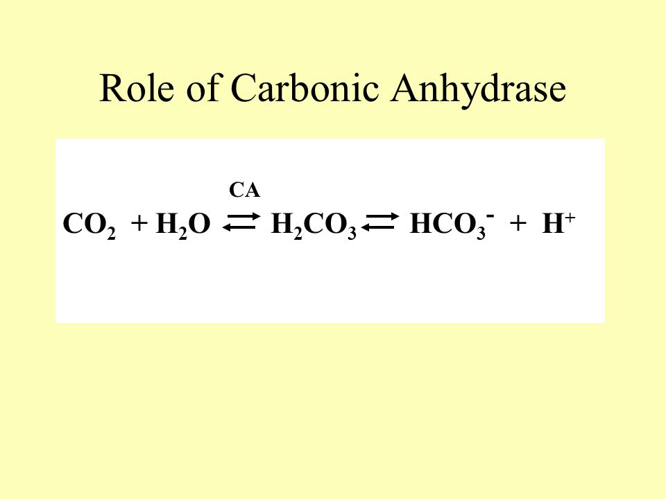 CO 2 + H 2 O H 2 CO 3 HCO 3 - + H + Role of Carbonic Anhydrase CA