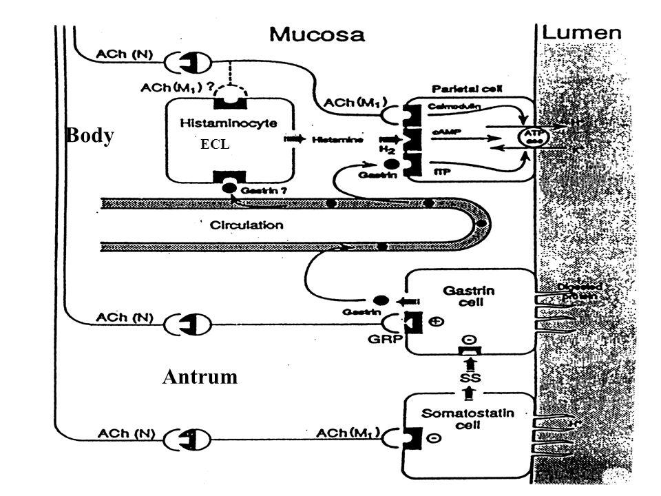 Antrum Body ECL