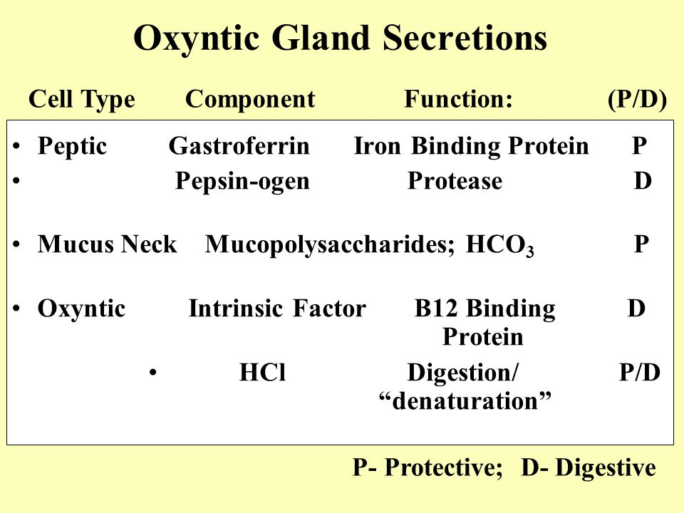 Oxyntic Gland Secretions Peptic GastroferrinIron Binding Protein P Pepsin-ogen Protease D Mucus Neck Mucopolysaccharides; HCO 3 P Oxyntic Intrinsic Factor B12 BindingD Protein HCl Digestion/ P/D denaturation Cell Type Component Function: (P/D) P- Protective; D- Digestive