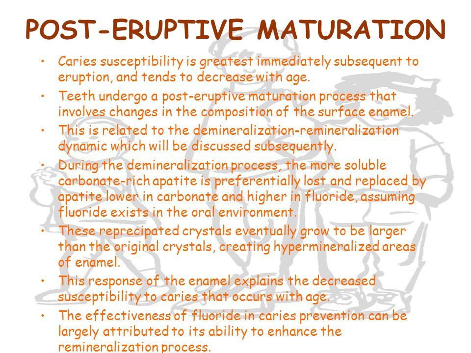 POST-ERUPTIVE MATURATION Caries susceptibility is greatest immediately subsequent to eruption, and tends to decrease with age. Teeth undergo a post-er