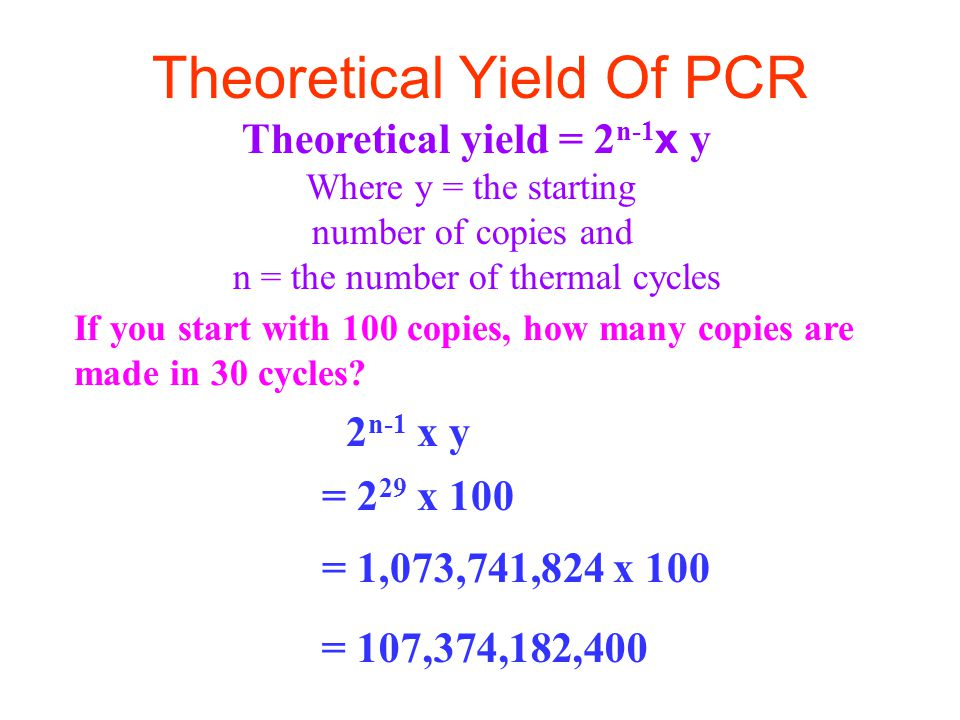 Theoretical Yield Of PCR Theoretical yield = 2 n-1 x y Where y = the starting number of copies and n = the number of thermal cycles = 107,374,182,400 If you start with 100 copies, how many copies are made in 30 cycles.