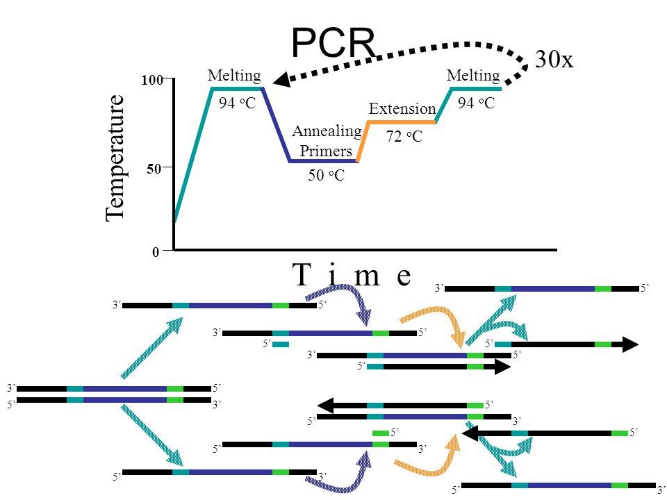 PCR Melting 94 o C Melting 94 o C Annealing Primers 50 o C Extension 72 o C Temperature 100 0 50 T i m e 30x 5'3' 5' 3'5' 3' 5' 3'5' 3' 5' 3'5' 3' 5'3' 5'