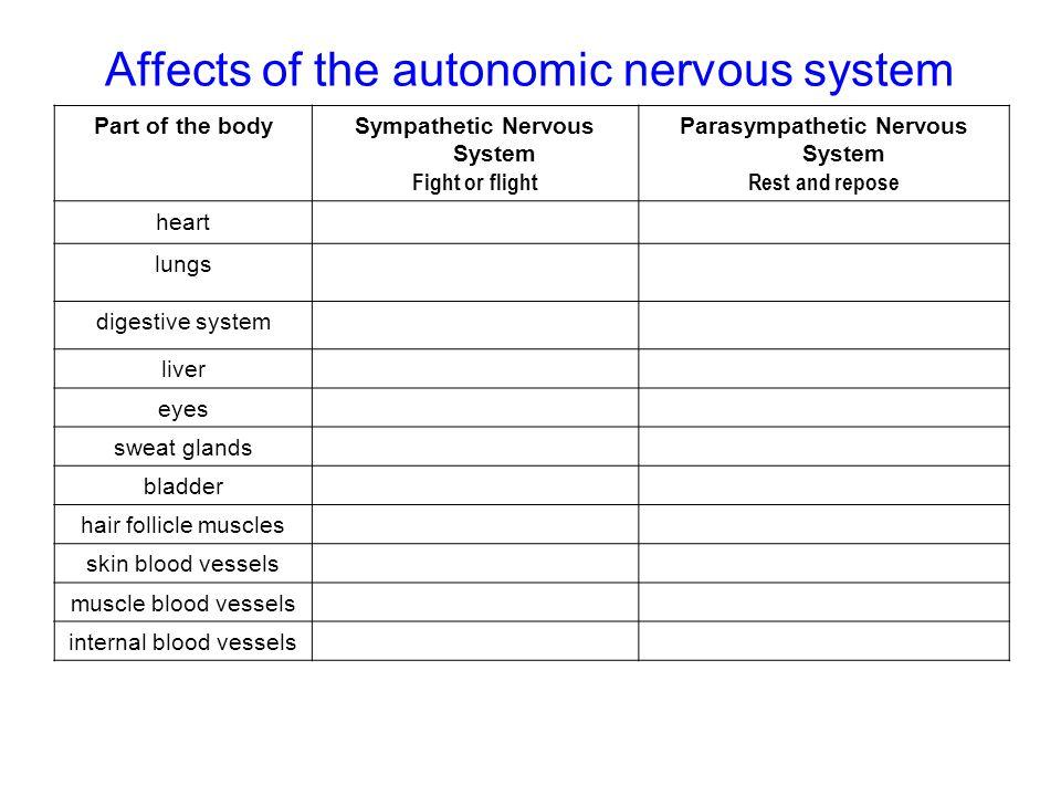 Affects of the autonomic nervous system Part of the bodySympathetic Nervous System Fight or flight Parasympathetic Nervous System Rest and repose hear