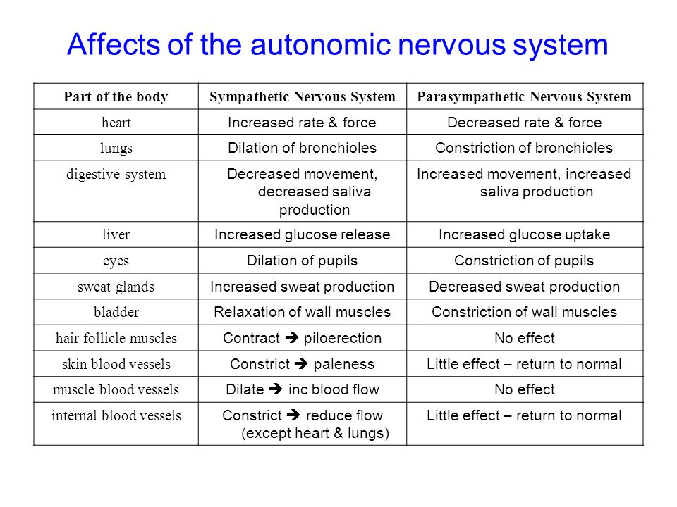 Affects of the autonomic nervous system Part of the bodySympathetic Nervous SystemParasympathetic Nervous System heart Increased rate & forceDecreased