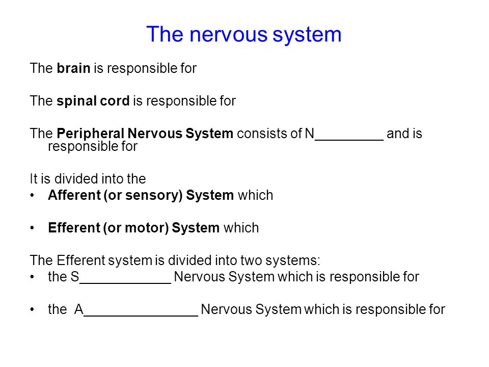 The nervous system The brain is responsible for The spinal cord is responsible for The Peripheral Nervous System consists of N_________ and is responsible for It is divided into the Afferent (or sensory) System which Efferent (or motor) System which The Efferent system is divided into two systems: the S____________ Nervous System which is responsible for the A_______________ Nervous System which is responsible for