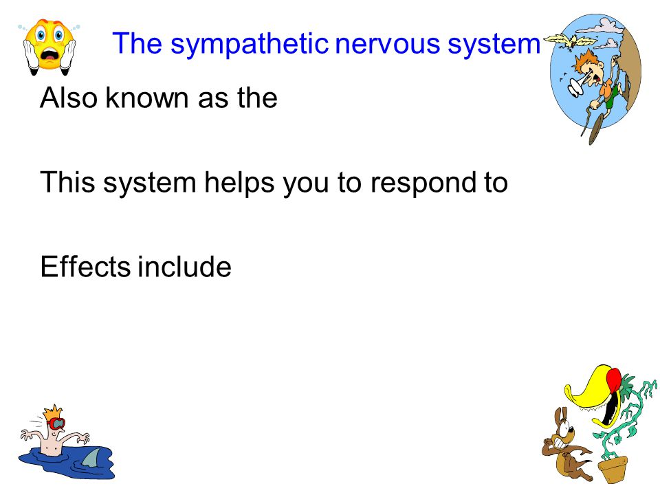 The sympathetic nervous system Also known as the This system helps you to respond to Effects include