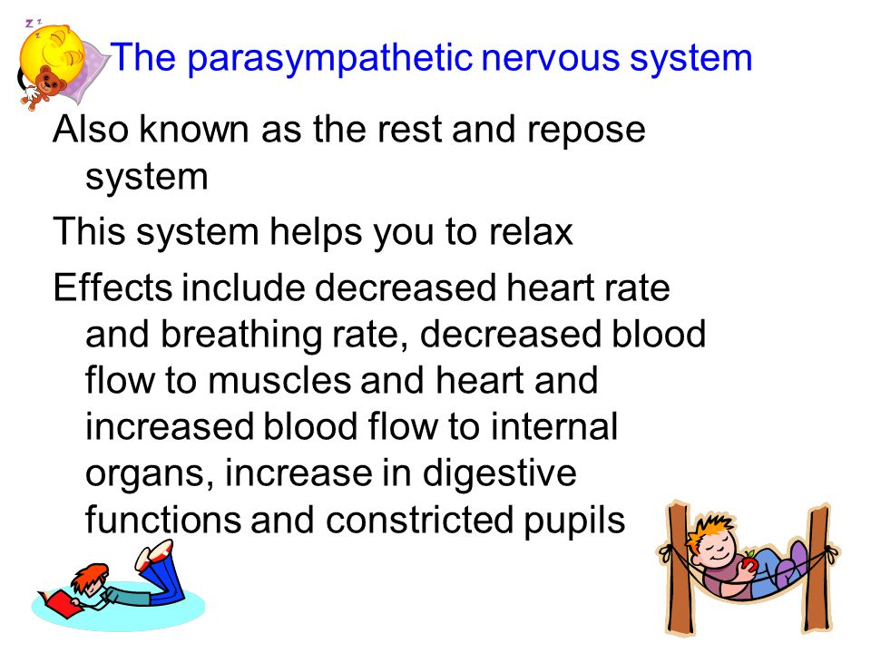 The parasympathetic nervous system Also known as the rest and repose system This system helps you to relax Effects include decreased heart rate and breathing rate, decreased blood flow to muscles and heart and increased blood flow to internal organs, increase in digestive functions and constricted pupils