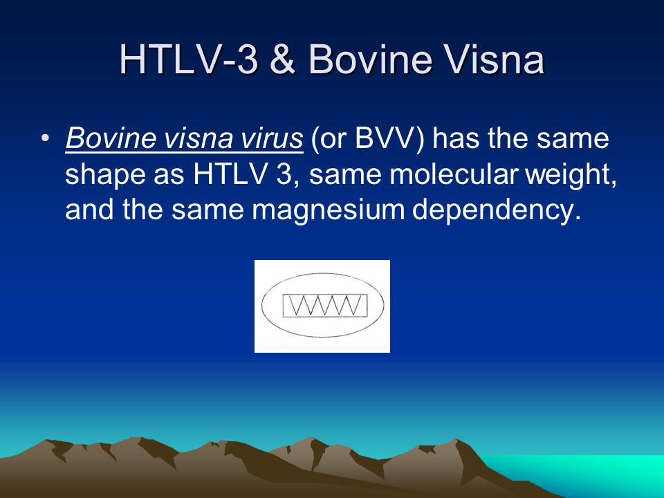HTLV-3 & Bovine Visna Bovine visna virus (or BVV) has the same shape as HTLV 3, same molecular weight, and the same magnesium dependency.