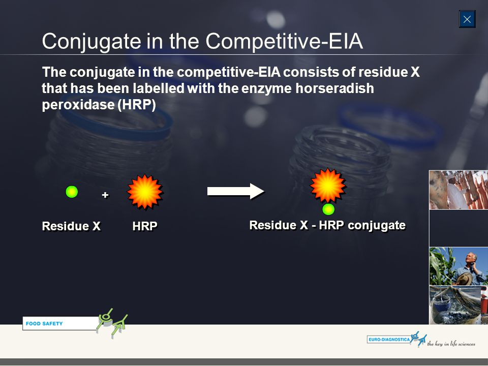 Conjugate in the Competitive-EIA The conjugate in the competitive-EIA consists of residue X that has been labelled with the enzyme horseradish peroxidase (HRP) Residue X + + HRP Residue X - HRP conjugate