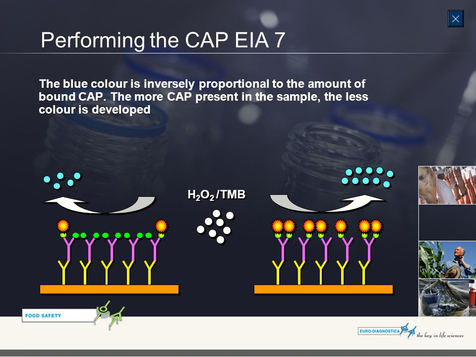 Performing the CAP EIA 7 The blue colour is inversely proportional to the amount of bound CAP.