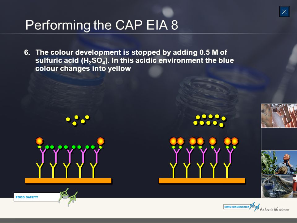 Performing the CAP EIA 8 6.The colour development is stopped by adding 0.5 M of sulfuric acid (H 2 SO 4 ).