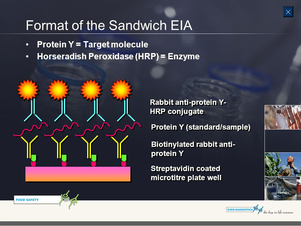 Format of the Sandwich EIA Biotinylated rabbit anti- protein Y Streptavidin coated microtitre plate well Streptavidin coated microtitre plate well Protein Y (standard/sample) Rabbit anti-protein Y- HRP conjugate Rabbit anti-protein Y- HRP conjugate Protein Y = Target molecule Horseradish Peroxidase (HRP) = Enzyme