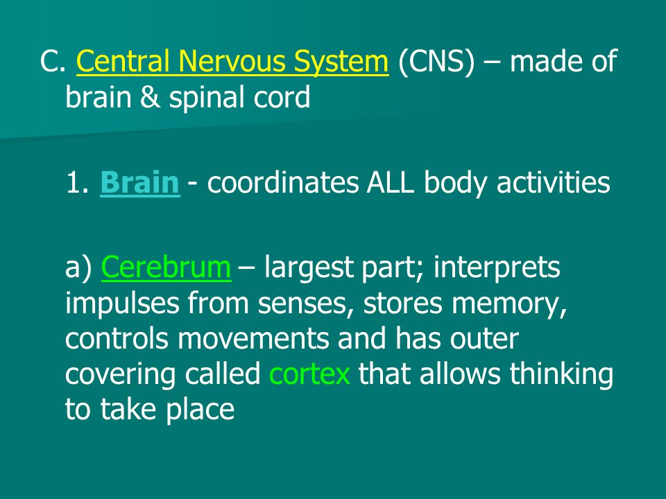 C. Central Nervous System (CNS) – made of brain & spinal cord 1. Brain - coordinates ALL body activities a) Cerebrum – largest part; interprets impuls