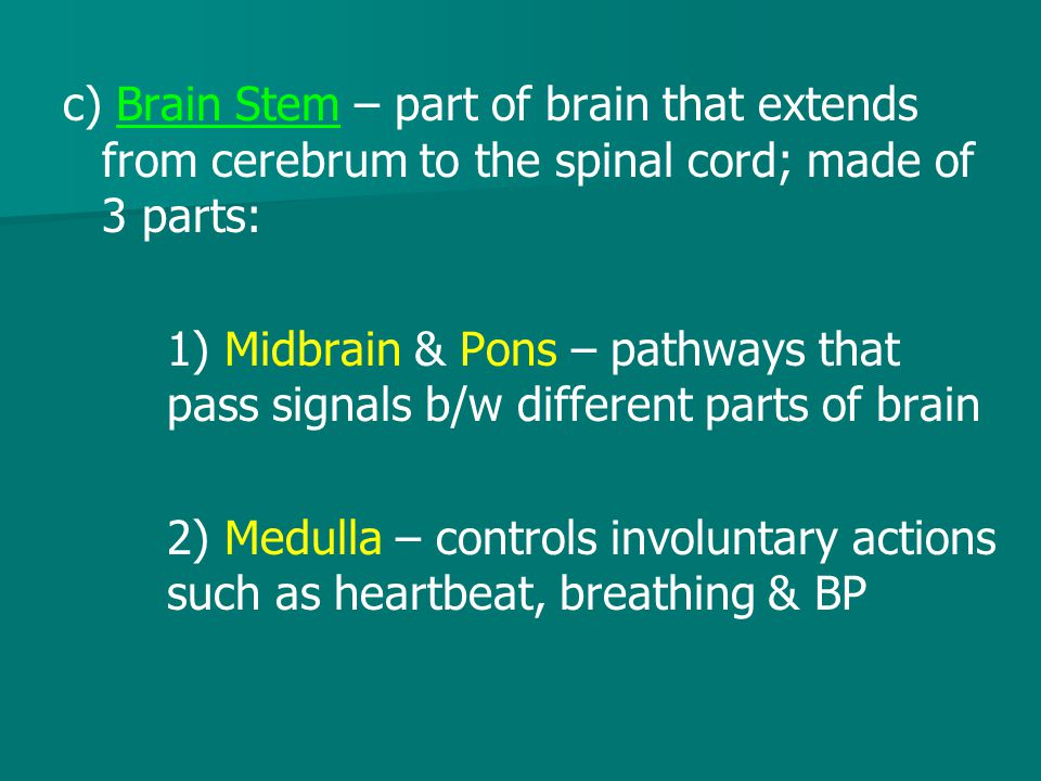 c) Brain Stem – part of brain that extends from cerebrum to the spinal cord; made of 3 parts: 1) Midbrain & Pons – pathways that pass signals b/w diff
