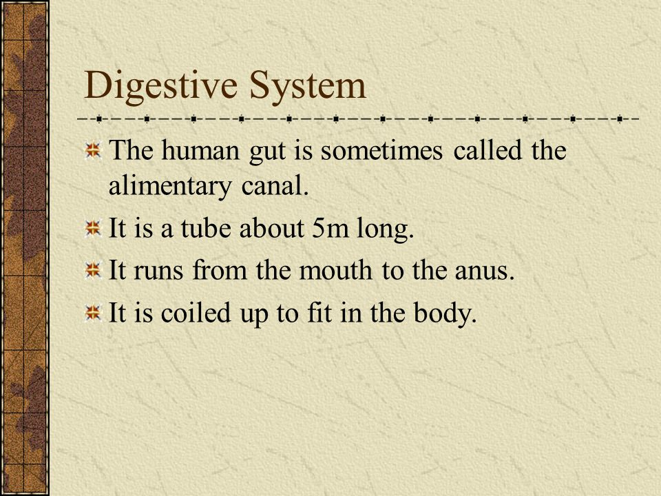 Digestive System The human gut is sometimes called the alimentary canal. It is a tube about 5m long. It runs from the mouth to the anus. It is coiled
