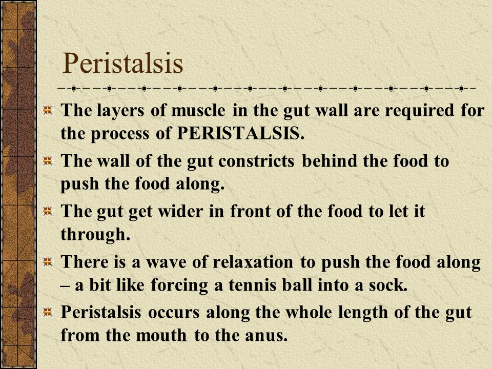 Peristalsis The layers of muscle in the gut wall are required for the process of PERISTALSIS. The wall of the gut constricts behind the food to push t