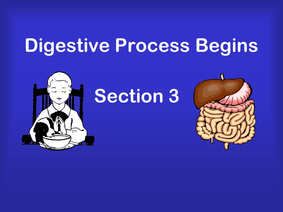Functions of Digestive System Breaks down food into molecules Molecules are absorbed into blood and carried throughout the body