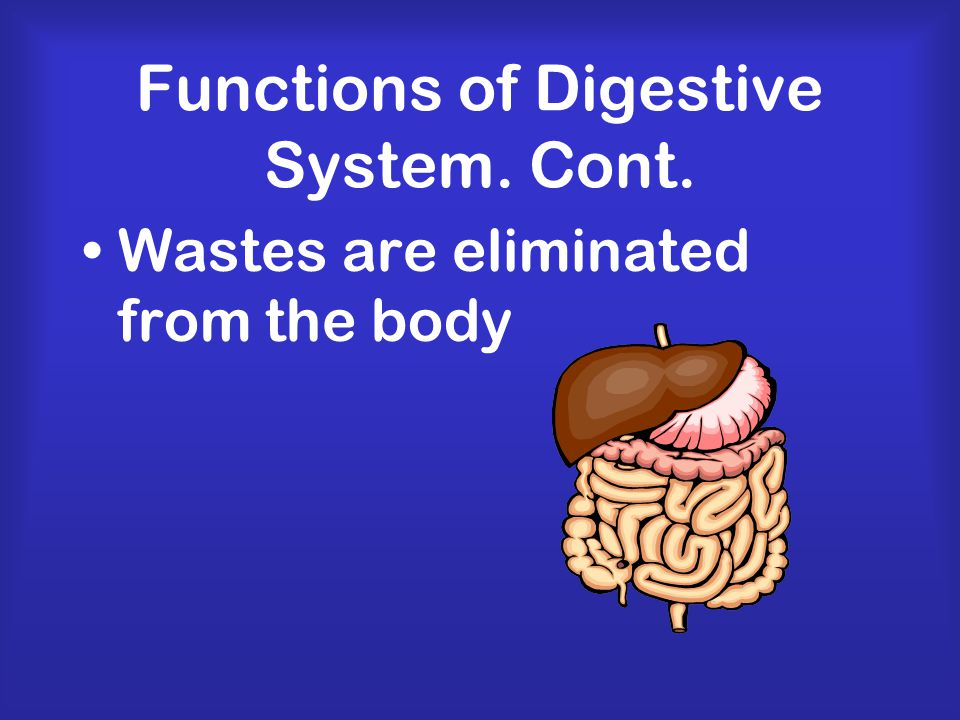 Digestion Process by which the body breaks down food into small nutrient molecules
