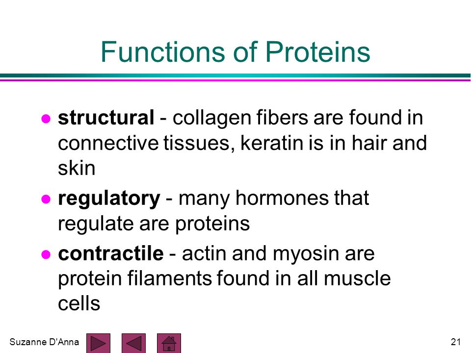 Suzanne D Anna21 Functions of Proteins l structural - collagen fibers are found in connective tissues, keratin is in hair and skin l regulatory - many hormones that regulate are proteins l contractile - actin and myosin are protein filaments found in all muscle cells