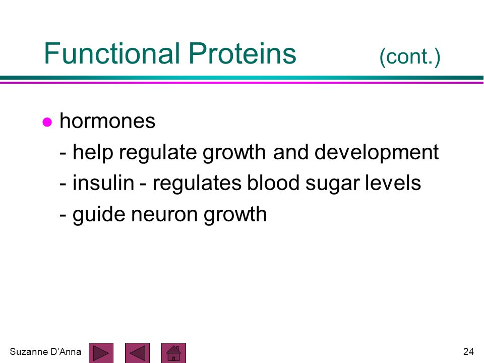 Suzanne D Anna24 Functional Proteins (cont.) l hormones - help regulate growth and development - insulin - regulates blood sugar levels - guide neuron growth