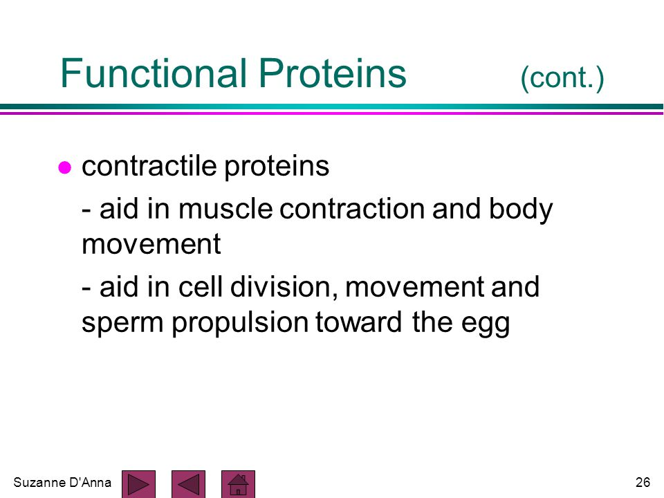 Suzanne D Anna26 Functional Proteins (cont.) l contractile proteins - aid in muscle contraction and body movement - aid in cell division, movement and sperm propulsion toward the egg