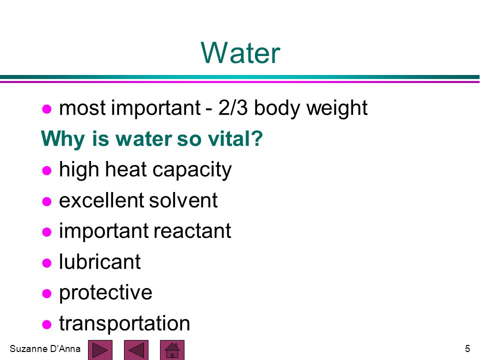 Suzanne D Anna5 Water l most important - 2/3 body weight Why is water so vital.