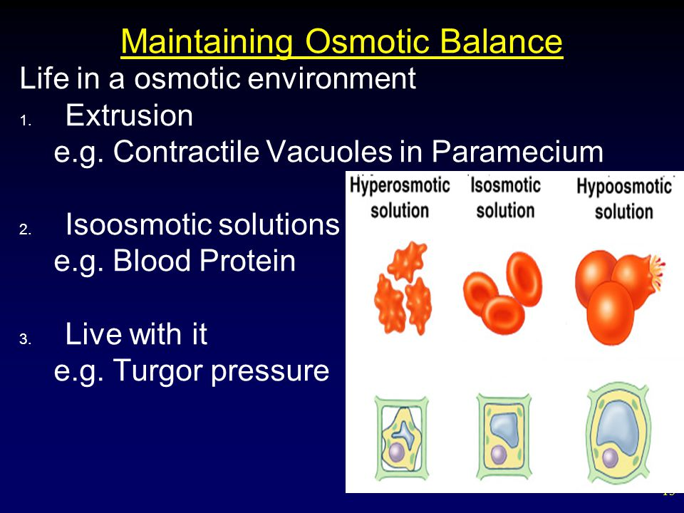 15 Maintaining Osmotic Balance Life in a osmotic environment 1.