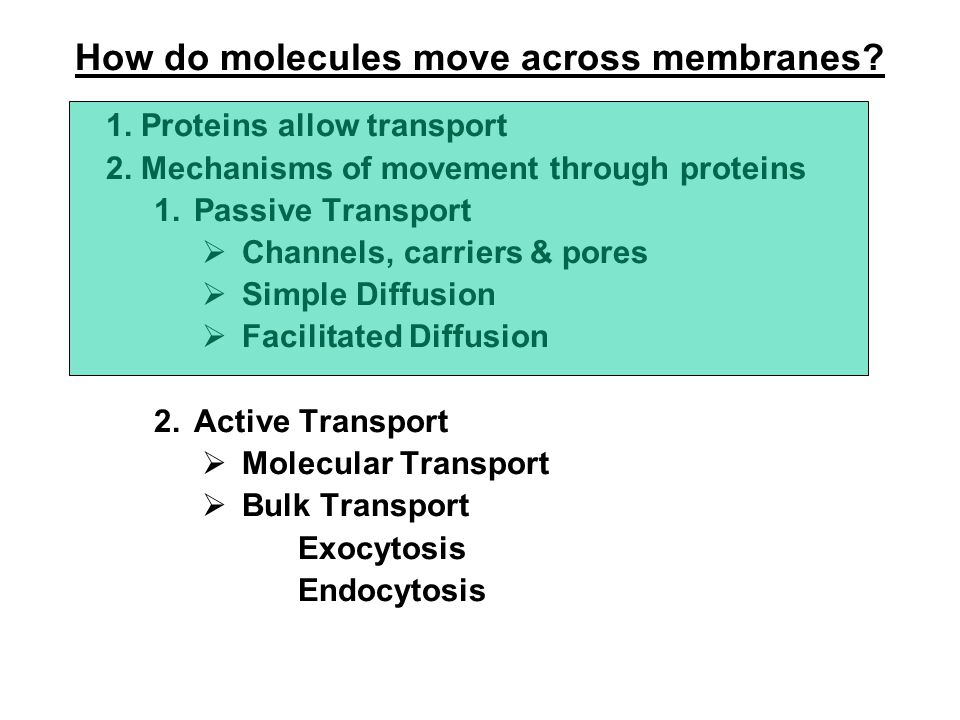 1.Proteins allow transport 2.