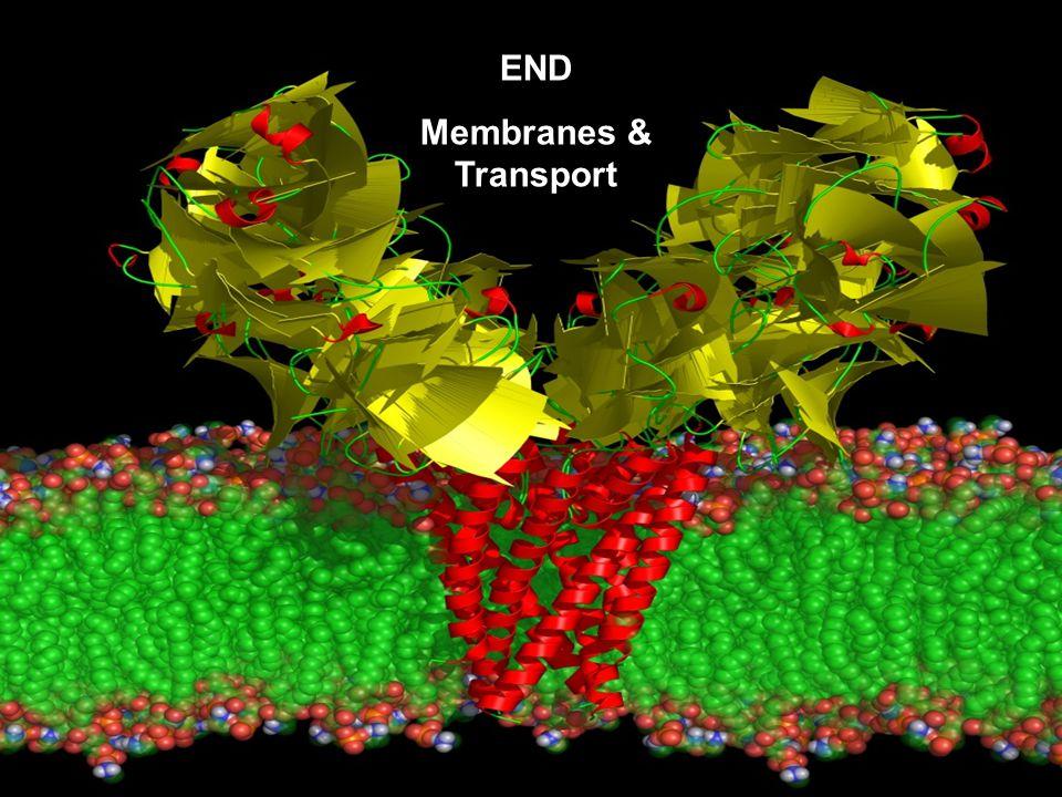 END Membranes & Transport