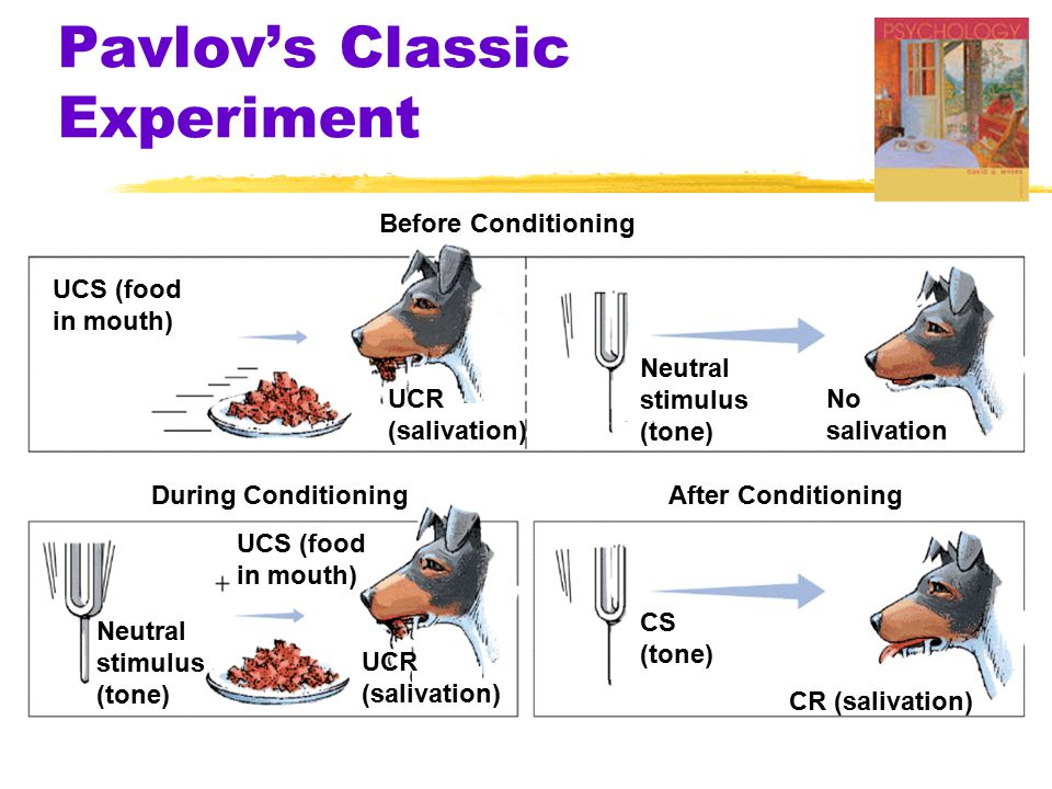 Pavlov's Classic Experiment Before Conditioning During ConditioningAfter Conditioning UCS (food in mouth) Neutral stimulus (tone) No salivation UCR (salivation) Neutral stimulus (tone) UCS (food in mouth) UCR (salivation) CS (tone) CR (salivation)