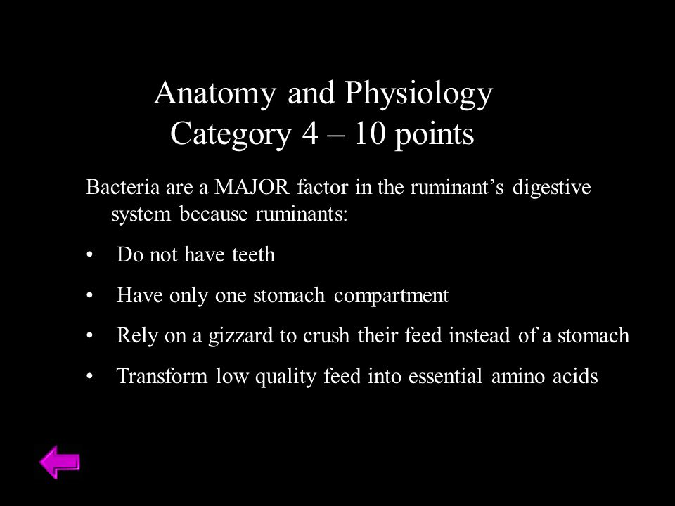 Anatomy and Physiology Category 4 – 10 points Bacteria are a MAJOR factor in the ruminant's digestive system because ruminants: Do not have teeth Have only one stomach compartment Rely on a gizzard to crush their feed instead of a stomach Transform low quality feed into essential amino acids