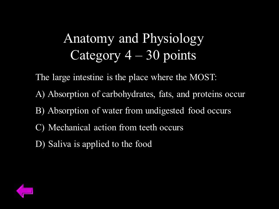 Anatomy and Physiology Category 4 – 30 points The large intestine is the place where the MOST: A) Absorption of carbohydrates, fats, and proteins occur B) Absorption of water from undigested food occurs C) Mechanical action from teeth occurs D) Saliva is applied to the food