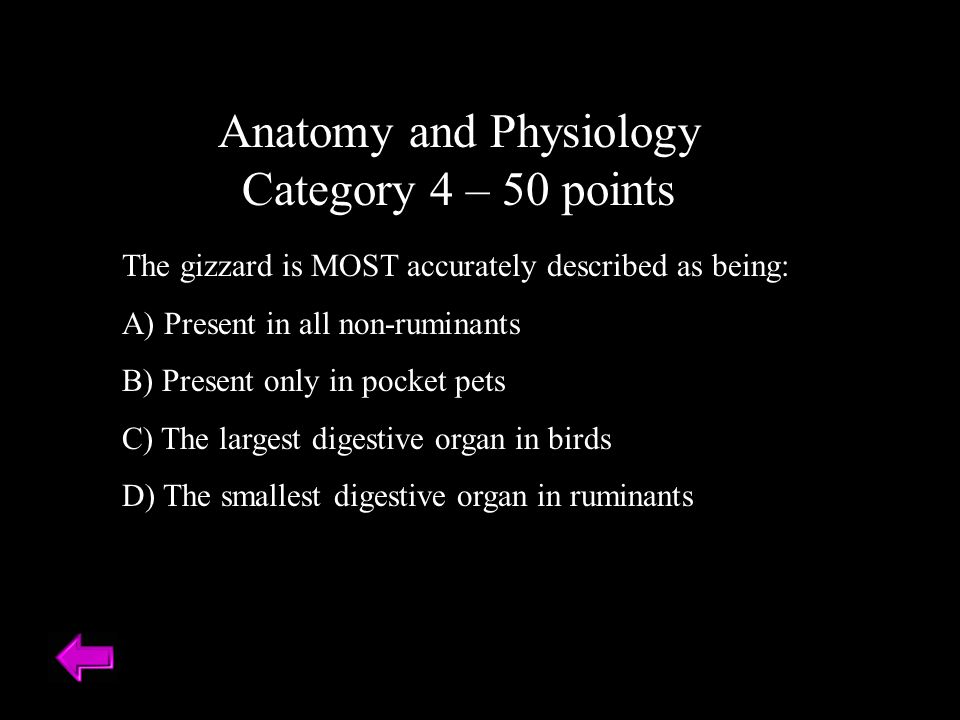 Anatomy and Physiology Category 4 – 50 points The gizzard is MOST accurately described as being: A) Present in all non-ruminants B) Present only in pocket pets C) The largest digestive organ in birds D) The smallest digestive organ in ruminants