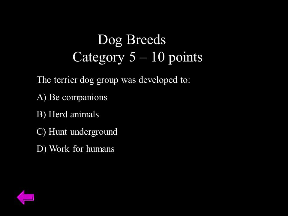 Dog Breeds Category 5 – 10 points The terrier dog group was developed to: A) Be companions B) Herd animals C) Hunt underground D) Work for humans