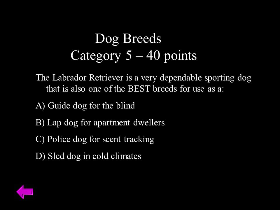 Dog Breeds Category 5 – 40 points The Labrador Retriever is a very dependable sporting dog that is also one of the BEST breeds for use as a: A) Guide dog for the blind B) Lap dog for apartment dwellers C) Police dog for scent tracking D) Sled dog in cold climates