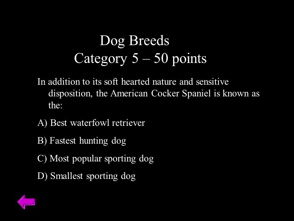Dog Breeds Category 5 – 50 points In addition to its soft hearted nature and sensitive disposition, the American Cocker Spaniel is known as the: A) Best waterfowl retriever B) Fastest hunting dog C) Most popular sporting dog D) Smallest sporting dog