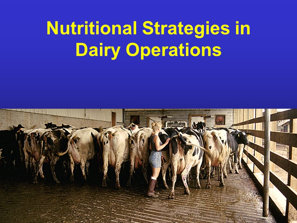 NDSU Animal and Range Sciences Nutritional Strategies in Dairy Operations