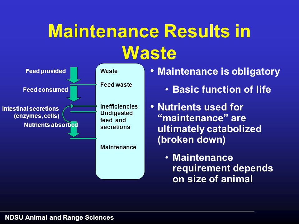 NDSU Animal and Range Sciences Maintenance Results in Waste Feed provided Feed waste Intestinal secretions (enzymes, cells) Nutrients absorbed Feed co