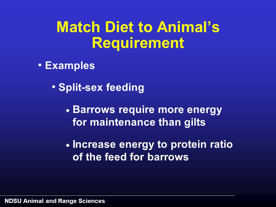 NDSU Animal and Range Sciences Examples Split-sex feeding  Barrows require more energy for maintenance than gilts  Increase energy to protein ratio