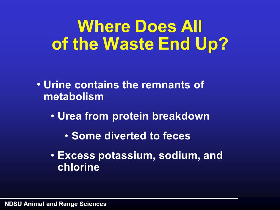 NDSU Animal and Range Sciences Urine contains the remnants of metabolism Urea from protein breakdown Some diverted to feces Excess potassium, sodium,